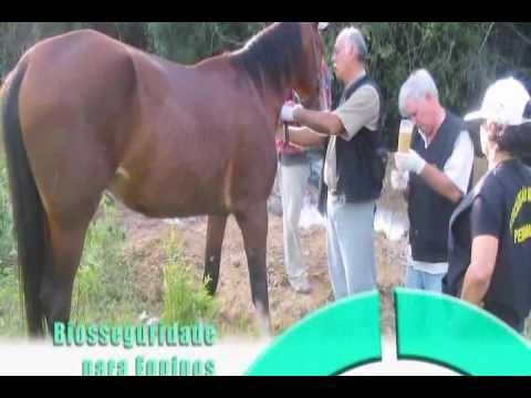 Biosseguridade para Equinos Um guia para manter seus cavalos saudáveis