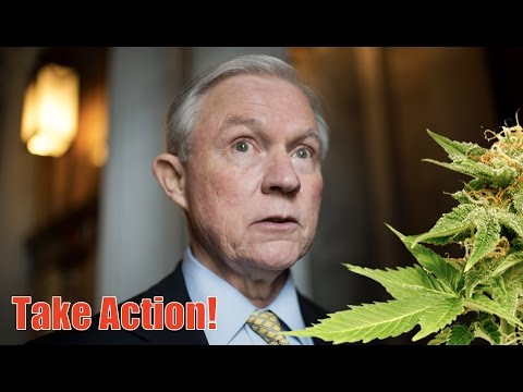 Jeff Sessions Will Wage War on Marijuana as Attorney General—Let s Stop Him
