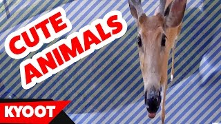 The Funniest Pets & Outdoor Animal Videos of 2016 Compilation   Kyoot Animals