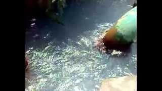 ابار مياه عذبه تخرج بدون الات رفع فى صحراء مصر