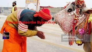 গরু জবাই বন্ধের আবেদন খারিজ করে দিলো ভারতের সর্বোচ্চ আদালত