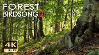 4K Forest Birdsong 2 - Birds Sing in the Woods - No Loop Realtime Birdsong - Relaxing Nature Video