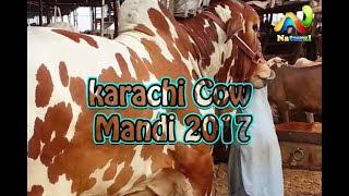 Cow Mandi 2017 ||  karachi Cow Mandi ||  Eid ul Adha 2017