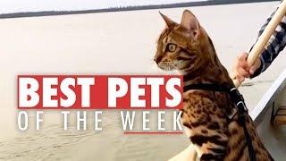 Best Pets of the Week   December 2017 Week 2