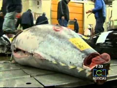 Atún rojo mas caro del mundo