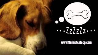 CALM YOUR DOG | Rain Sounds Soothe Anxious Dog | Nature & Birds