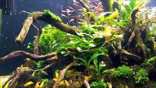 Roots of Heaven The Rescape