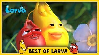 LARVA | BEST OF LARVA | Funny Cartoons for Kids | Cartoons For Children | LARVA 2017 WEEK 32