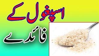 Isabgol, Ispagol ke Fayde - Health Benefits Of Ispagol In urdu /  Hindi