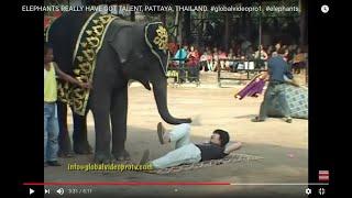 ELEPHANTS REALLY HAVE GOT TALENT, PATTAYA, THAILAND