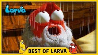 LARVA | BEST OF LARVA | Funny Cartoons for Kids | Cartoons For Children | LARVA 2017 WEEK 30