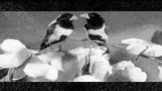 Eternal Rafi-Lata Duet -PYAR KA BANDHAN TUTE NA-Shola Aur Shabnam-ETERNAL ROMANTIC DUET-1961