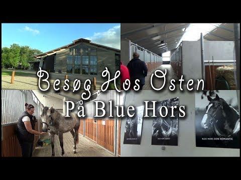 Besøg Hos Osten - På Blue Hors