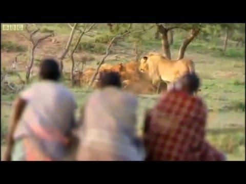 Xxx Mp4 Man Vs Nature Lion Vs Man Theif Vs Lion 3gp Sex
