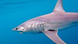 One Hour Battle with a Giant Mako Shark and Crazy Tuna Fishing Action - 4K