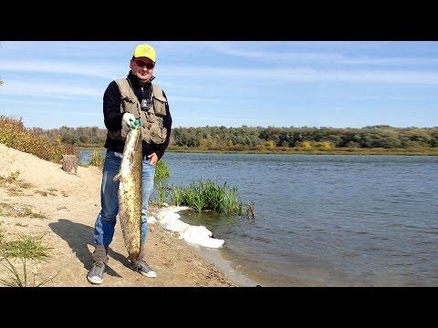 поезка на рыбалку видео