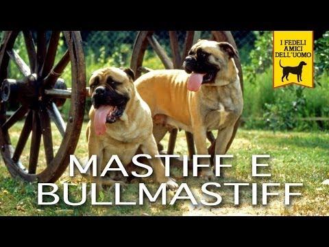 MASTIFF e BULLMASTIFF Trailer documentario