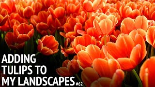 #62 It's time to plant those tulips!