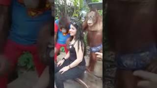 Naughty Monkey Pressing Hot Girls Boobs Touching | Monkey Playing with a Girl Breast | Funny Moments