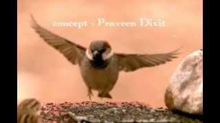 Extinction of Sparrows(Gauraiya / गौरैया) - Presentation