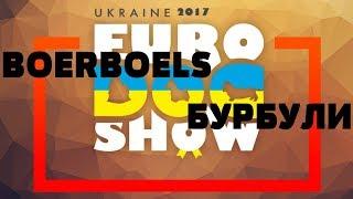 Euro Dog Show 2017   CAC-UA   БУРБУЛИ   BOERBOELS   25.08.2017