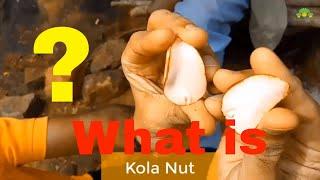 "What is ""Kola Nut"" ? 🌰"