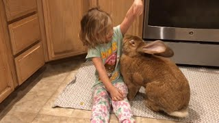 3-Year-Old Girl and Giant Rabbit Get Into Trouble Together