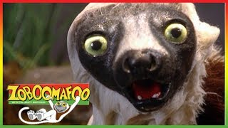 🐅 Zoboomafoo 260   World of Legs   Animal shows for kids   Full Episodes   HD 🐅