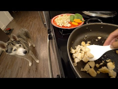 What Cooking Dinner With My Husky Looks Like