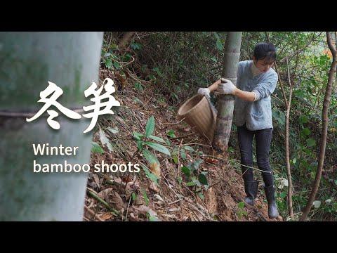 又到了挖冬笋的季节,简简单单挖一筐,太美味了 A variety of delicious winter bamboo shoots 杨大碗