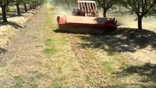 The Almond Harvest
