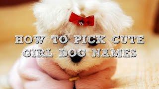 How To Pick Cute Girl Dog Names