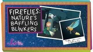 Fireflies: Nature's Baffling Blinkers | Animal Science for Kids