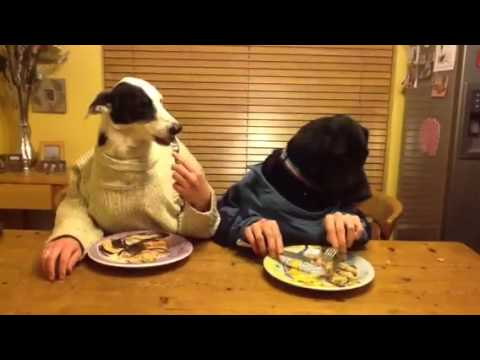 Zip and Buddy Dining (two dogs dining)