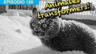 Animales Transformers!! l whatdafaqshow.com