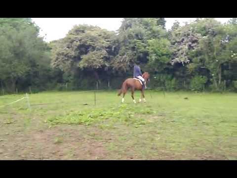 Xxx Mp4 Horse Riding Chris Rides Ezzy 3gp 3gp Sex