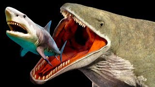 Mariana Trench Creatures That Are Way Scarier Than Megalodon