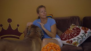 See How An Anxious Owner Leads To An Anxious Dog