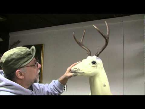 Testa s Taxidermy Tip s Mounting a Deer Head Part 3