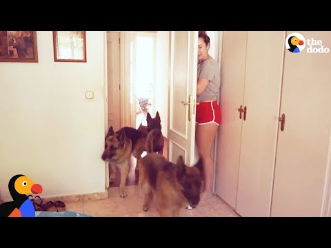 Xxx Mp4 Dogs Play Hide And Seek With Mom The Dodo 3gp Sex