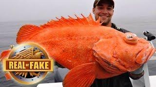 MUTANT GODZILLA FISH - real or fake?
