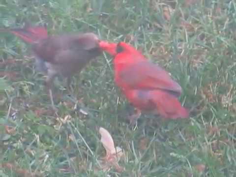 Xxx Mp4 Male Female Cardinals Kissing 3gp Sex
