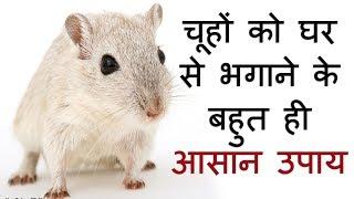 अब नहीं रहेगा घर में एक भी चूहा | चूहों को घर से भगाने का सबसे आसान उपाय | How To Get Rid of Mice