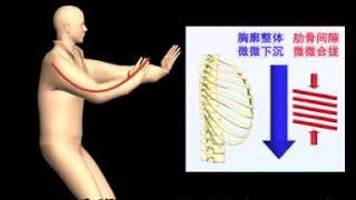 Tai Chi: Mecánica Interna del Tai Chi - Entender el Taichi por dentro