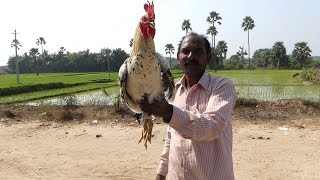 Country Chicken Curry Preparation in My Village