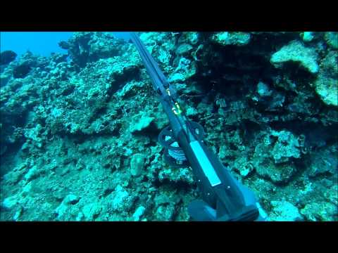 SPEARFISHING Hawaii Maui 2014 Episode.3 Divers Inspiration