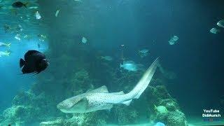 Das Aquarium in Wilhelmshaven Seeaquarium und Unterwasserwelt North Sea aquarium Wilhelmshaven