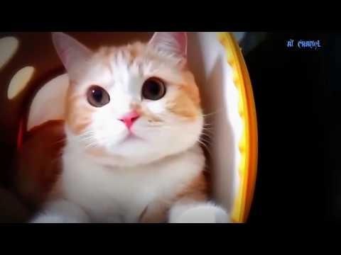 Xxx Mp4 Tak Tun Tuang Upiak Isil Siap Mandi Parodi Kucing Lucu 2018 3gp Sex