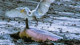 Dolphins and Birds Collaborate to Hunt Fish   BBC Earth