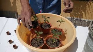 HOW TO PLANT, GROW, AND CARE FOR MARIGOLDS IN SUMMER (BENGALI)
